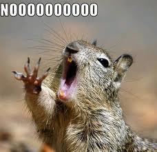noooo squirrel
